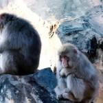 デジタル燃え尽き症候群猿